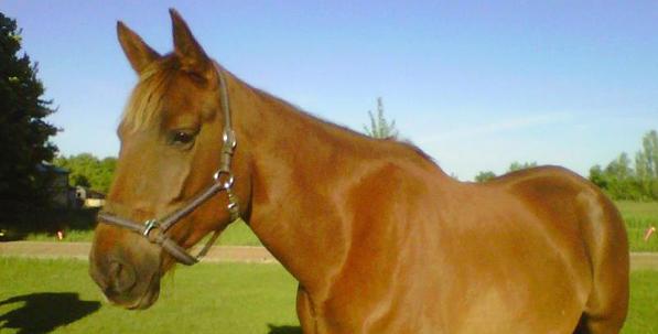 horsenorth