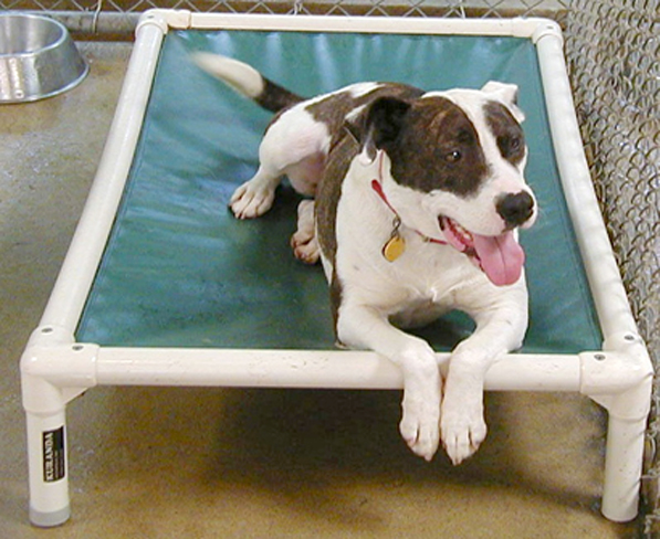 Best Animal Shelter : A dog s plea for nice bed at the wexford county animal