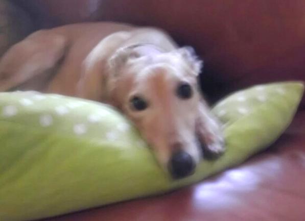 goldie, kathie's dog
