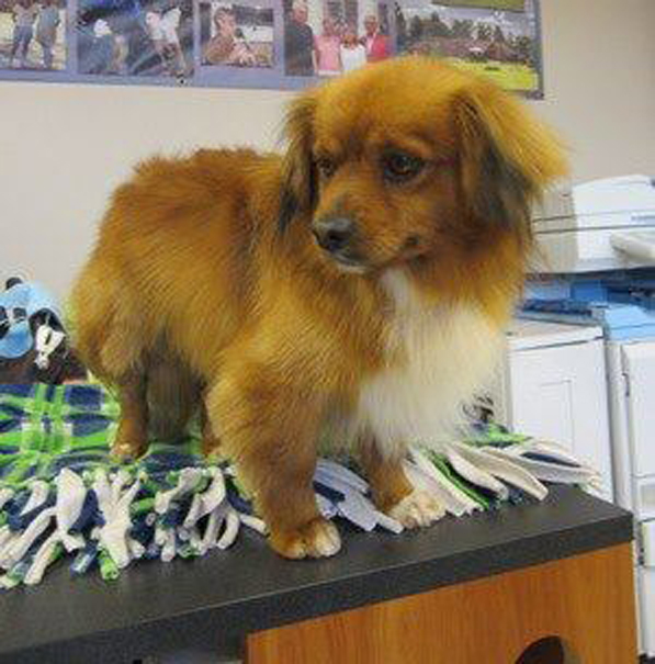 My name is Jefferson and for the first time in my life, I'm feeling loved and cared for. I am one of the 12 puppy mill dogs who just arrived here at LTBHS. I don't know too much about the outside world, but I can't wait to give it a try. Since my whole life has been spent with dogs, I'm very comfortable around them and I'm sure I'd be fine with cats too. I'm just a year old and my caretakers here think I am part Tibetan Spaniel. Now that I'm cleaned up, I'm feeling pretty handsome. I'm so glad to be here, but I really hope that a family will open their heart to me and give me the forever home I've been dreaming about all of my life. Learn more about me and all the other cats and dogs available for adoption.
