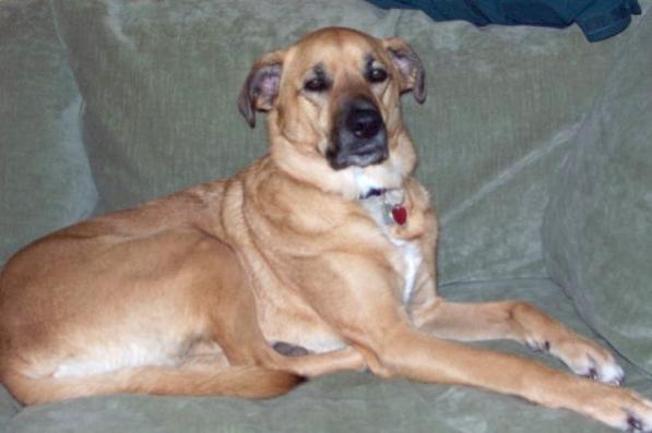 Karen's dog Sunny
