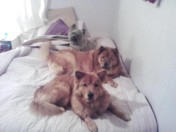 mistys dogs