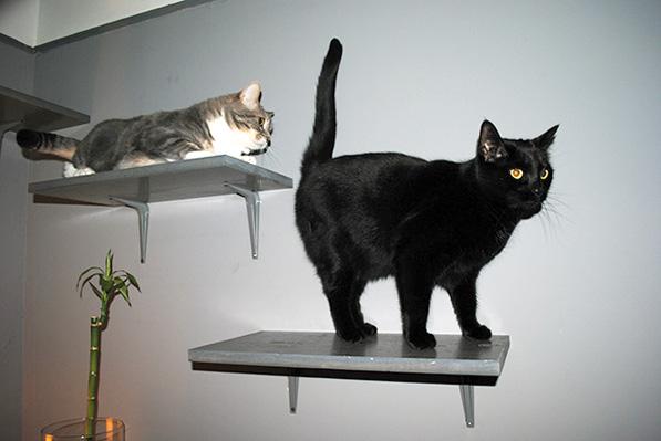 CatShelves3