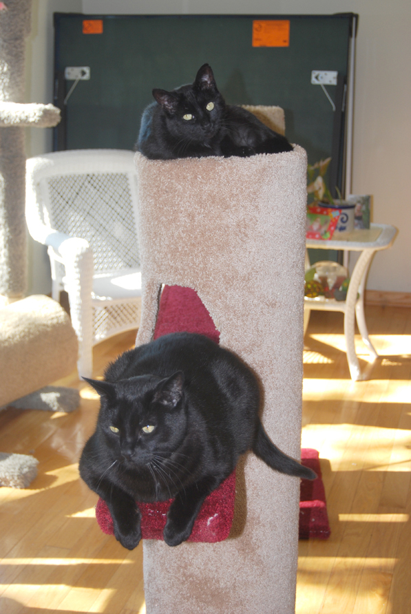 Julia's kitty Fusha and a friend