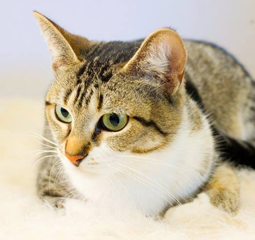 This is Akure, one of the many cats and kittens who were killed at the Wexford County Animal Shelter on May 24, 2013.