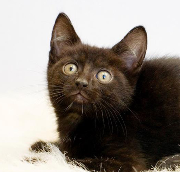 Photo taken same day as this baby was killed. Does she look sick or does she look like a baby kitten waiting for a home? Unfortunately this kitty wasn't on this earth long enough to know what love and family means.