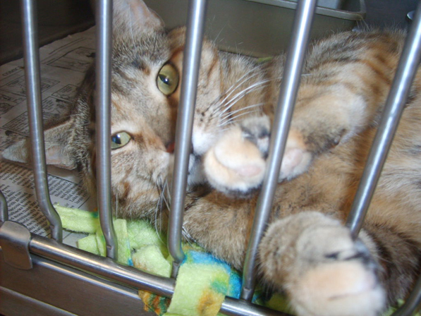 There were many cute and playful cats at the shelter waiting for their new family to come and find them!