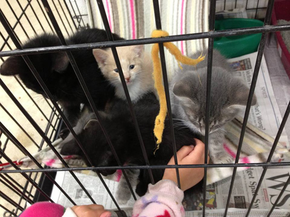 Before the mass killing, there were cages with kittens in them. After the killing, there were not. Photo taken from Facebook. Credit: Judy Nichols. All the volunteers are so appreciative to Judy and her grandchildren for going into the shelter so often to play with the animals there.