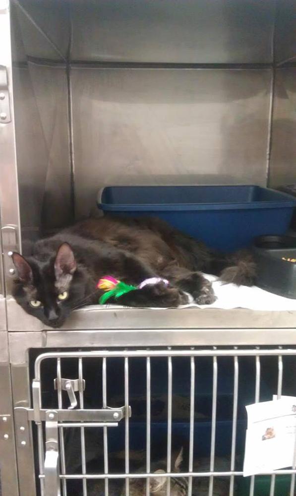 new cat cage