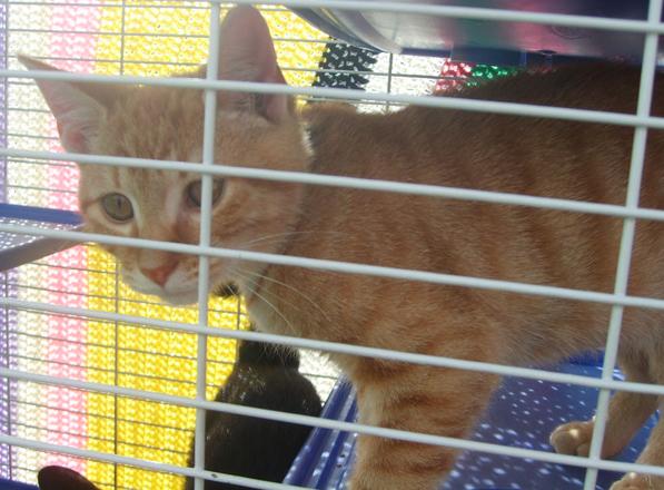 Adoptable kitty from Missaukee County