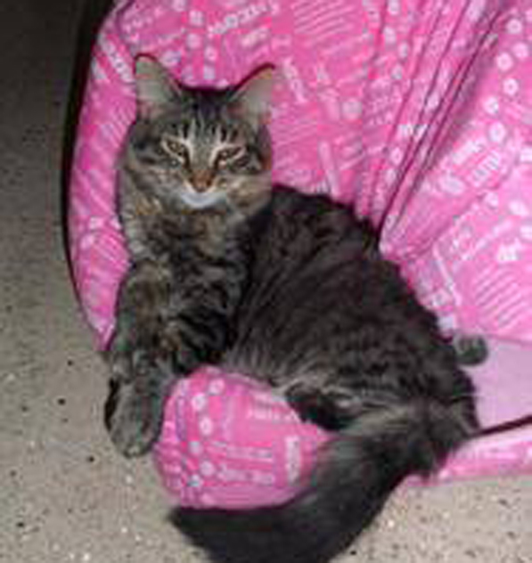 This kitty was adopted from Missaukee County