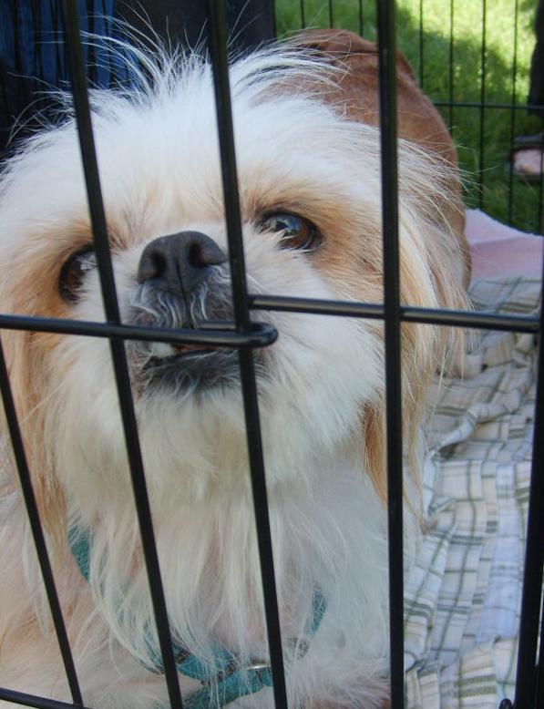 Adoptable dog through Handds to the Rescue