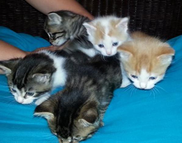 kitten group