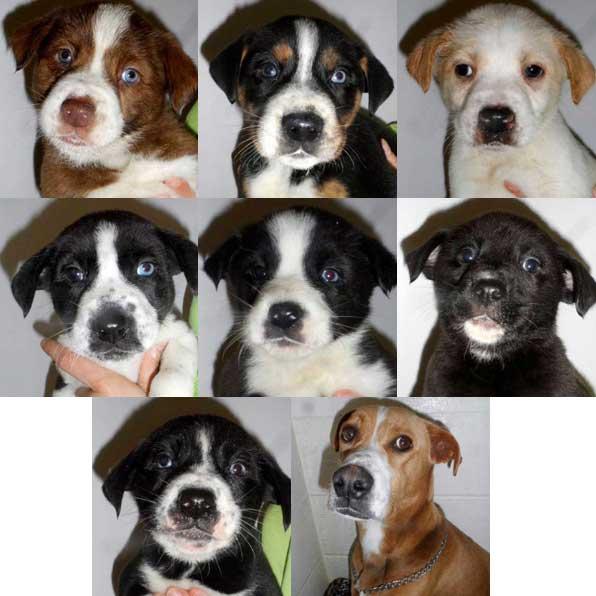 Big Hoss (male), Scrappy (male), Toby (male), Scooter (male), Princess (female), Apollo (male), Cassanova (male) and mom Remi
