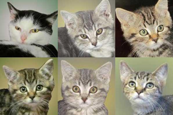 Boomer, Emily, Gracie, Nala, Peaches & Pudgy