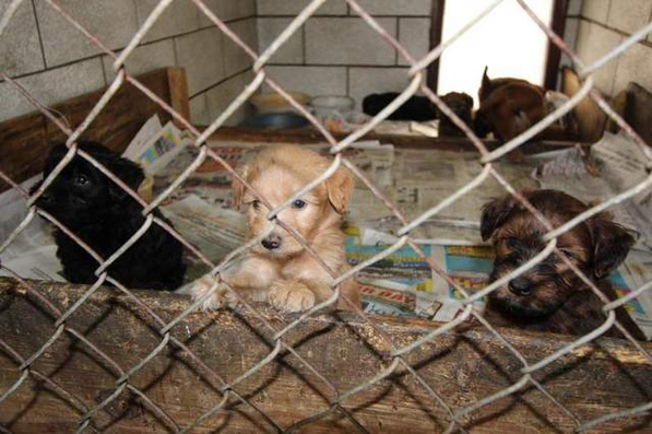 howell puppy mill