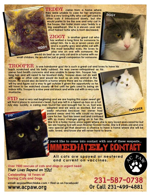 Petsmart Traverse City Cat Adoption
