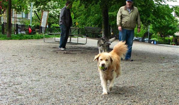 tc dog park