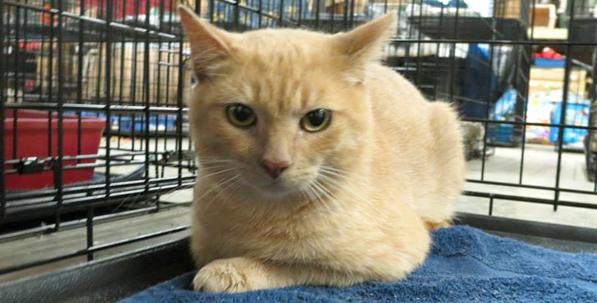 4.orange kitty