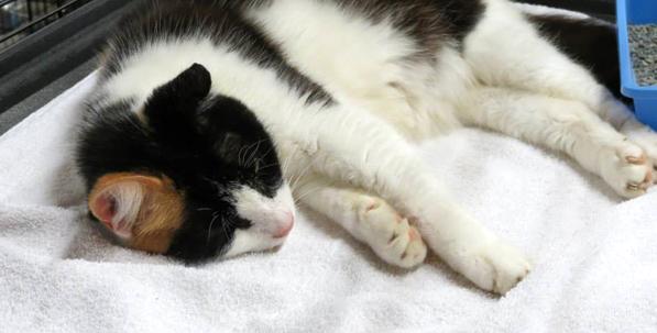 5.black and white sleeping