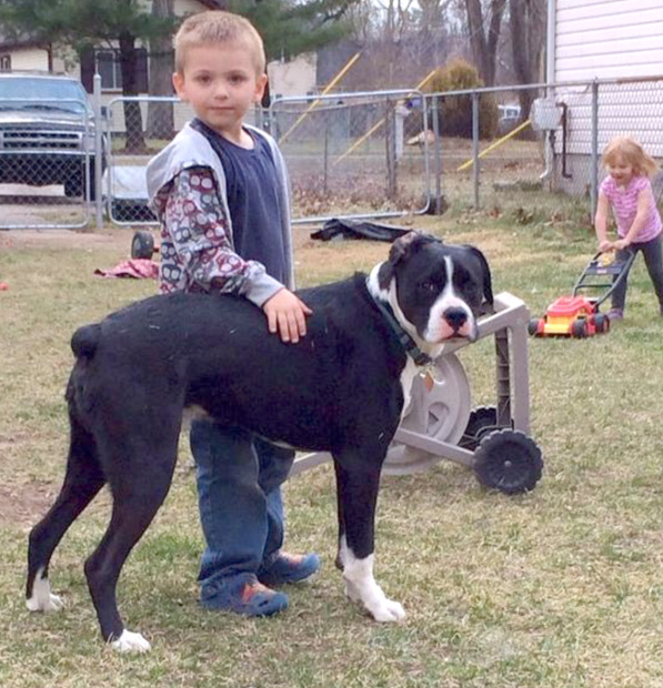 Oreo Kyllonen (with his best kid buddy) was a victim of BSL.