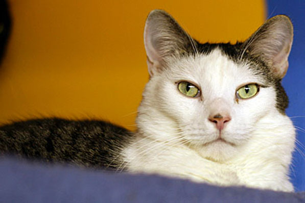 Grand Rapids Cat Rescues