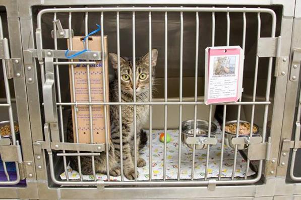 5-cat-with-scratcher
