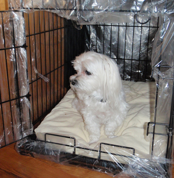 Basil in the Bubble the homemade oxygen crate & Local Story on Dogu0027s Oxygen Crate Makes Global Impact | Pet ...