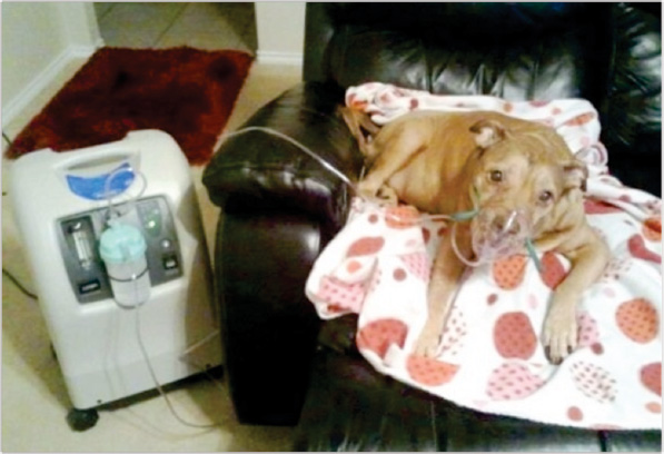 Wrinkles on Oxygen & Local Story on Dogu0027s Oxygen Crate Makes Global Impact | Pet ...