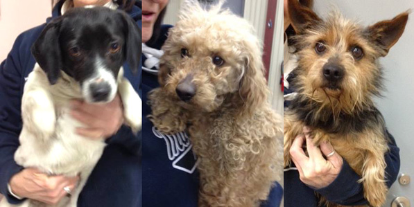 Freeway (Poodle), Rolly (Beagle) and the unnamed Yorkie went to A New Start on Life