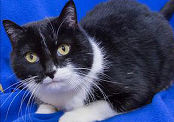 Sonny can be adopted at the MHS Rochester Hills adoption center.