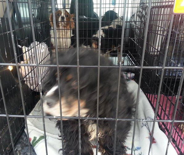 A new life awaits as the dogs get transported to rescue groups