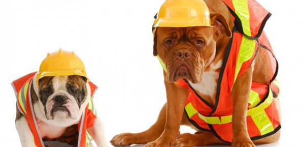 construction dogs main