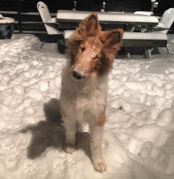 charlie snowy