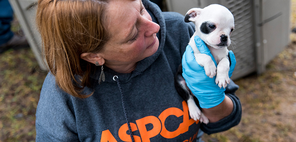 photo credit: ASPCA