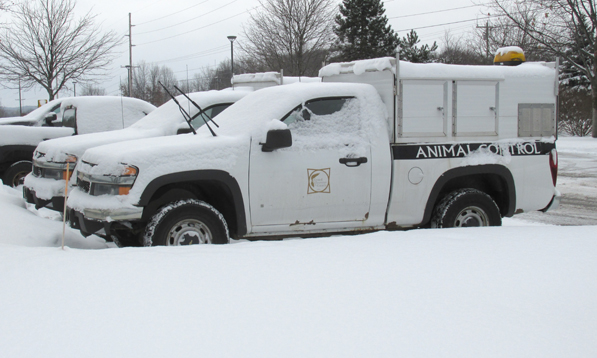 The County's two Animal Control trucks sit idle as stray and injured dogs roam the streets.