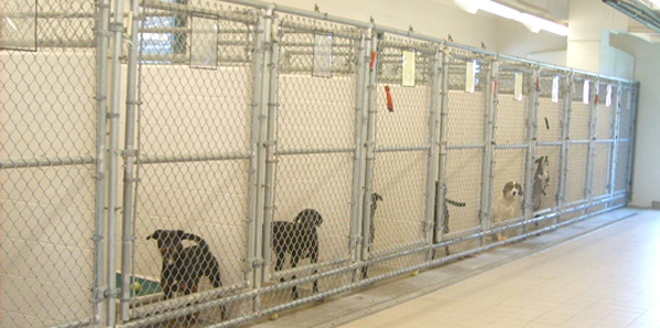chs kennels with dogs