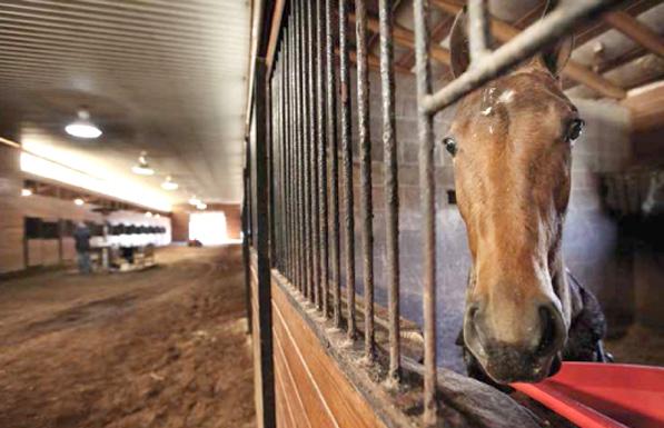 horse-humane-card