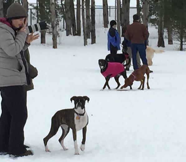 pet sitters walk