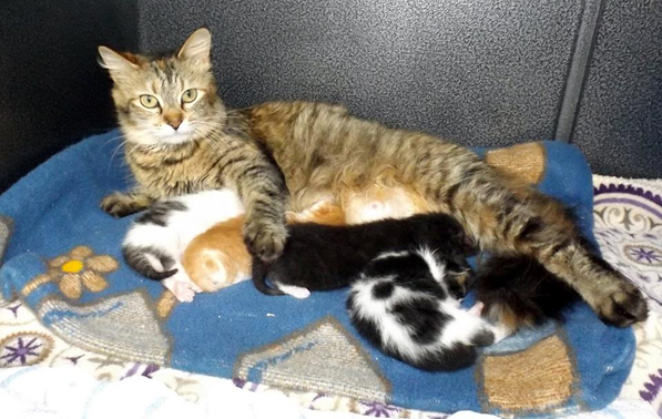 cat with babies