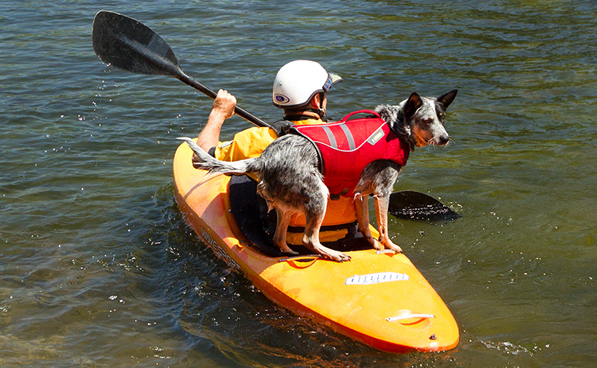 Get life jackets for your dog and more at http://www.ruffwear.com/
