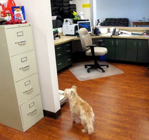 There always seems to be a furry friend behind the front counter or back in one of the offices getting a little special attention.