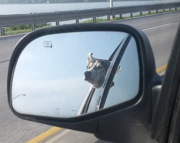 Hachi on Mackinac Bridge. Photo Credit: Joe Kinney's Facebook Page.