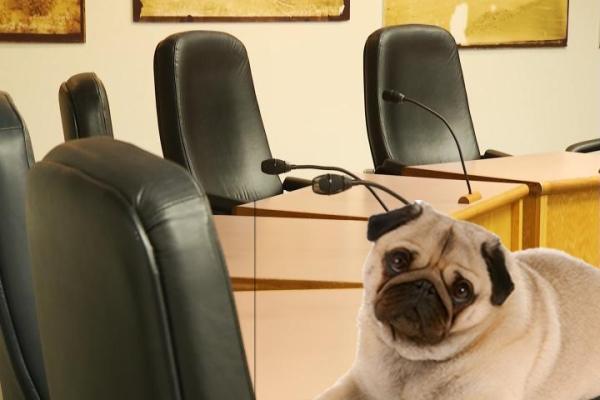 pug in commission room