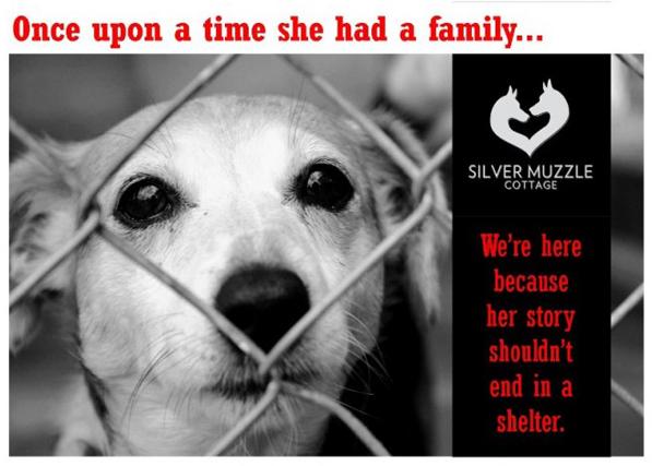 silver muzzle dog rescue