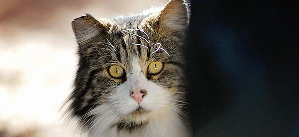 Cat_10_600x275