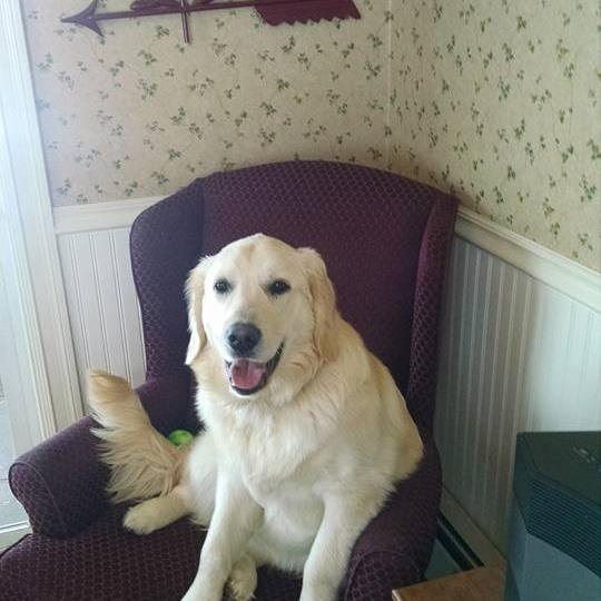 sadie in chair