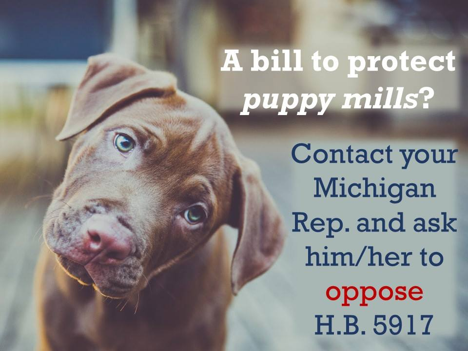 Your Help is Urgently Needed to Defeat Michigan Puppy Mill